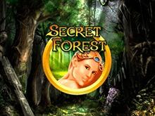 Secret Forest на зеркале клуба
