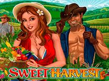 Сладкий Урожай в онлайн клубе